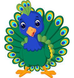 beautiful peacock vector image