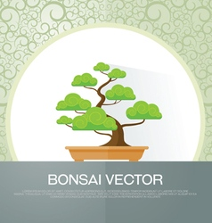 bonsai plant vector image