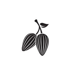 cocoa beans on pod with leaf for drinks and baking vector image
