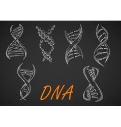 DNA helix models chalk sketches vector