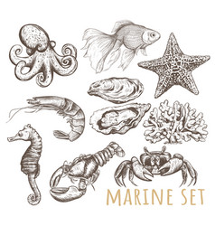 Marine animals collection vector