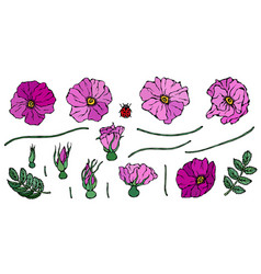 Wild rose pink flower dog rose briar leaf vector