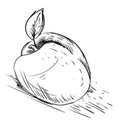 an apricot sketch on white background vector image