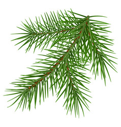 Green fluffy spruce branch accessory symbol vector
