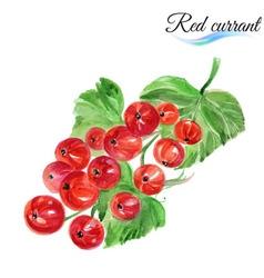 Watercolor red currant vector