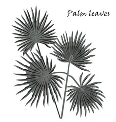 silhouette tropical palm leaves black isolated on vector image