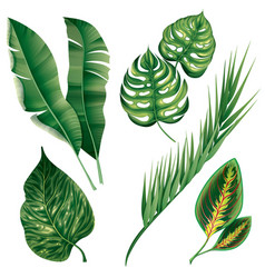 Realistic tropical botanical foliage plants set vector