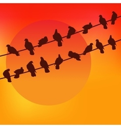 Birds against the sunset Colorful vector
