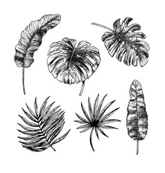 drawing set tropical leaves sketch vector image