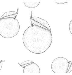 oranges hand drawn sketch as seamless pattern vector image