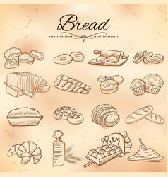 template different types bread and loafs for vector image