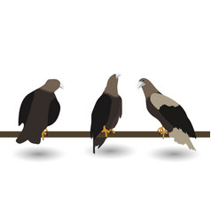 Set of silhouettes of fast living dangerous eagle vector