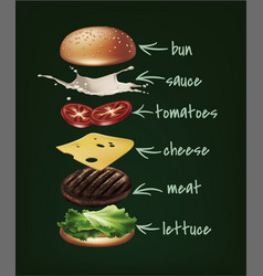 burger ingredients vector image