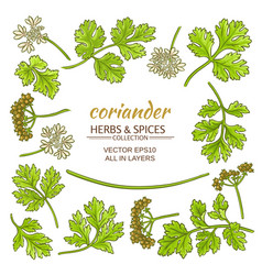 coriander elements set vector image