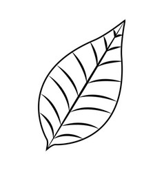 Nature leave foliage botanical image vector