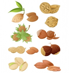 set of various nuts vector image