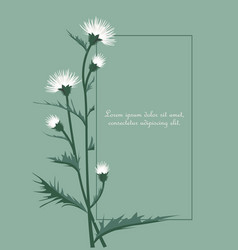 thistle with leaves vector image