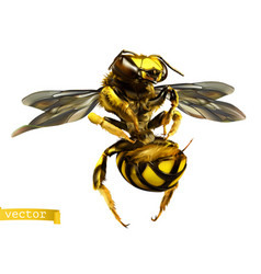 wasp 3d realistic vector image