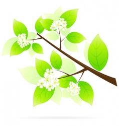 tree branch icon vector image vector image