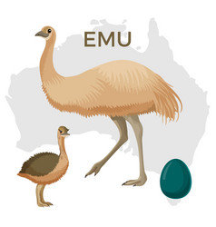 emu bird small and large isolated on white small vector image