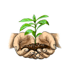 young plant with ground in hands vector image