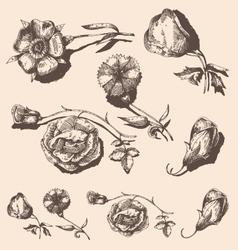 Set of vintage flowers vector image vector image