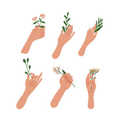 elegant female hands holding flowers and leaves on vector image