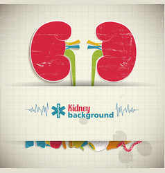 Flat kidney background vector
