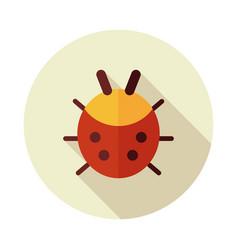 ladybug flat icon vector image