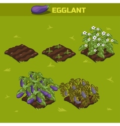 SET 2 Isometric Stage of growth Eggplant vector image