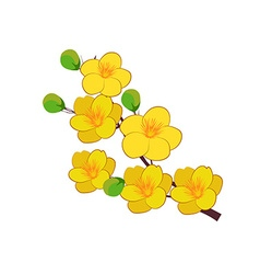 Yellow Apricot Flower traditional lunar new year vector