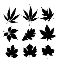Leaf silhouette vector image vector image