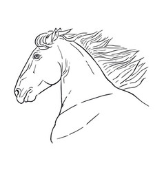 running horse head realistic drawing vector image vector image