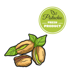 Colored pistachio on white vector