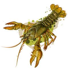 crayfish color realistic image a river crab vector image