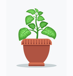 dieffenbachia with spotted leaves in big clay pot vector image