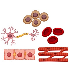 Different type of stem cell vector image