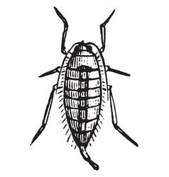 female spring cankerworm moth vintage vector image
