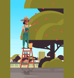 woman farmer picking ripe apples from tree african vector image
