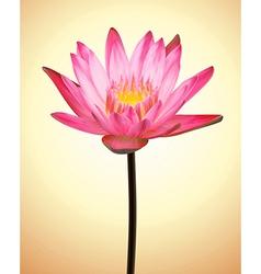 Oriental Flower Lotus Exotic Plant vector image vector image
