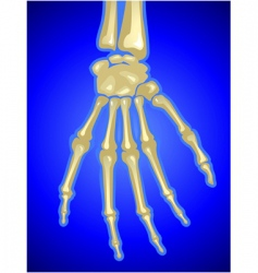 bones vector image vector image