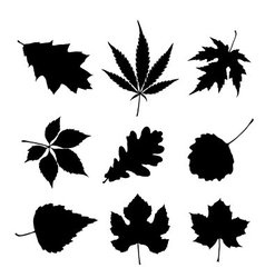 Leaf silhouette set vector image vector image