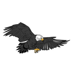 American bald eagle flying wildlife image vector