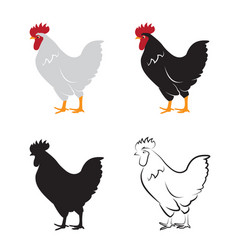 chicken design on white background hen farm vector image