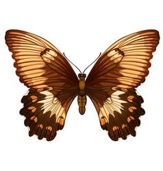 Papilio aegeus vector
