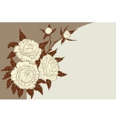 Peonies flower composition vector