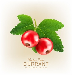 currant2 vs vector image vector image