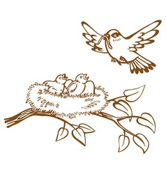 bird nest and chicks vector image