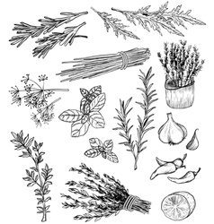 Herb and spices set vector image