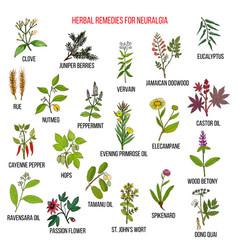best herbal remedies for neuralgia vector image